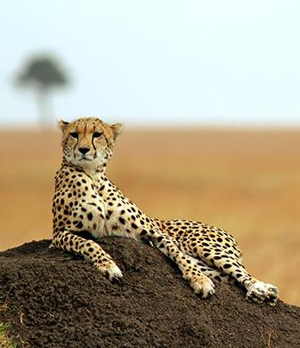 Oferta Safari Kwanza