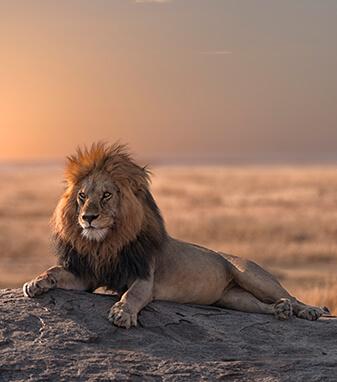 Oferta Safari Kenya Pikipiki